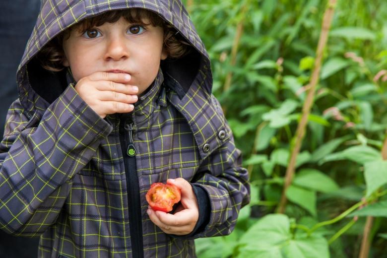 Gesunde und regionale Ernährung, Saisonal gekochte Speisen