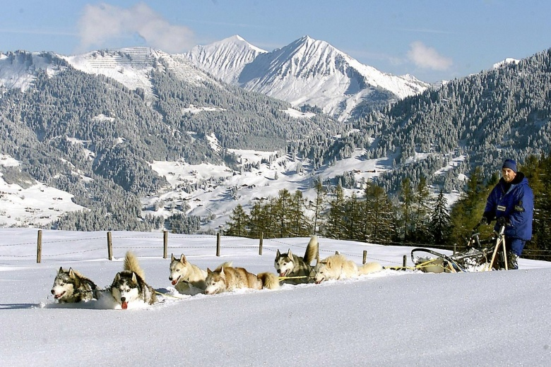 Husky Toni, Schlittenhunde, Trappertag in Vorarlberg, Familienhotel Lagant